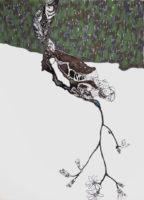 開きはじめた opening | 2014 | 241×332mm | pencil, crayon, watercolor on paper