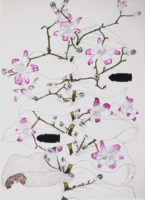 咲く花 bloomed flowers | 2014 | 241×332mm | pencil, crayon, watercolor on paper