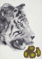 トラと花 tiger and flowers | 2016 | 337×244mm | pencil, color pencil, crayon on paper